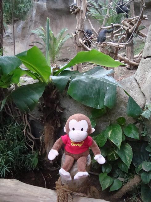 giorgio-con-gli-altri-scimpanze.JPG